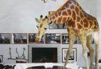 Жираф в интерьере или «дикие» животные в вашем доме