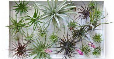 Живая стена из растений Tillandsia