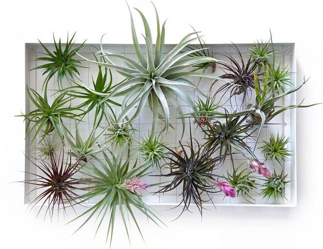 Живая стена из растений от дизайнера