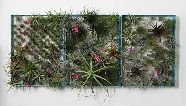 Живая стена из растений: композиция из рамок
